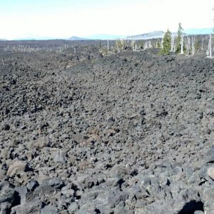 McKenzie Pass summit, life is  struggle amongst a field of lava rock